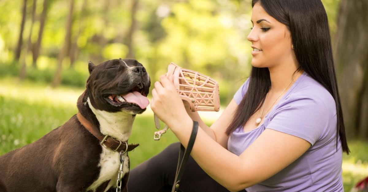 Comment souscrire une assurance responsabilité civile pour son chien ?