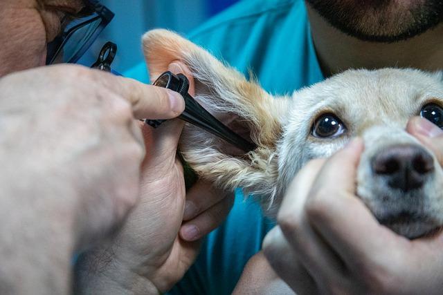 Acheter des médicaments pour son animal dans une pharmacie vétérinaire