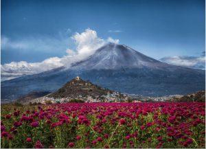 biodiversité de Mexique